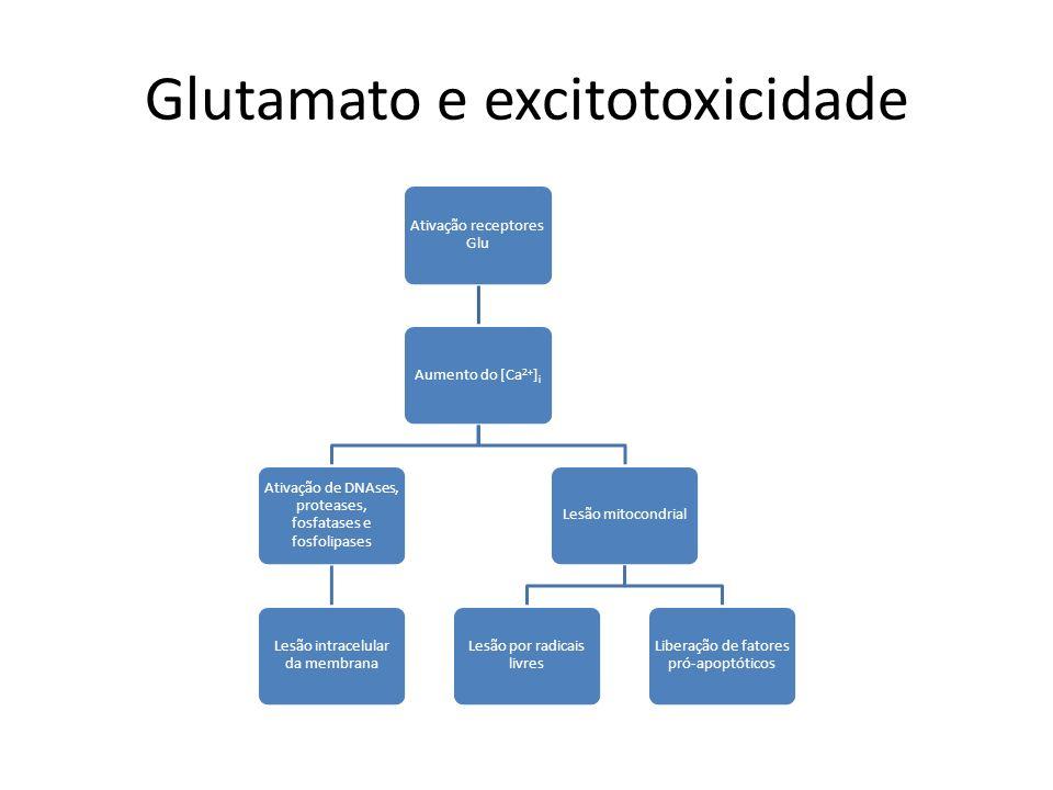 Glutamato e excitotoxicidade Ativação receptores Glu Aumento do [Ca 2+ ]i Ativação de DNAses, proteases, fosfatases e fosfolipases Lesão intracelular