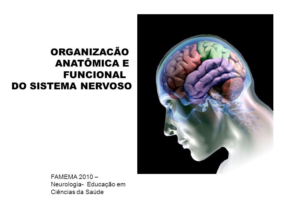 TRONCO ENCEFÁLICO Haste em que o cérebro e o cerebelo se apóiam Núcleos motores e sensoriais dos nervos cranianos Formação reticular: complexa rede de neurônios que em parte servem de estações de retransmissão do cérebro para o cerebelo e medula e vice-versa.