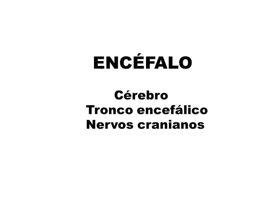 ENCÉFALO Cérebro Tronco encefálico Nervos cranianos