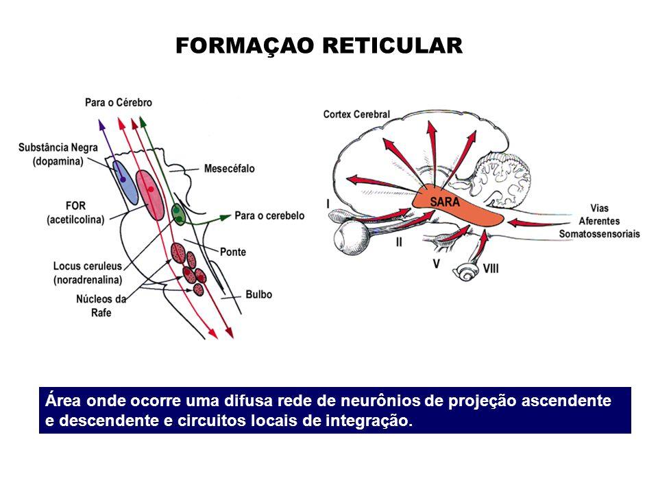 FORMAÇAO RETICULAR Área onde ocorre uma difusa rede de neurônios de projeção ascendente e descendente e circuitos locais de integração.