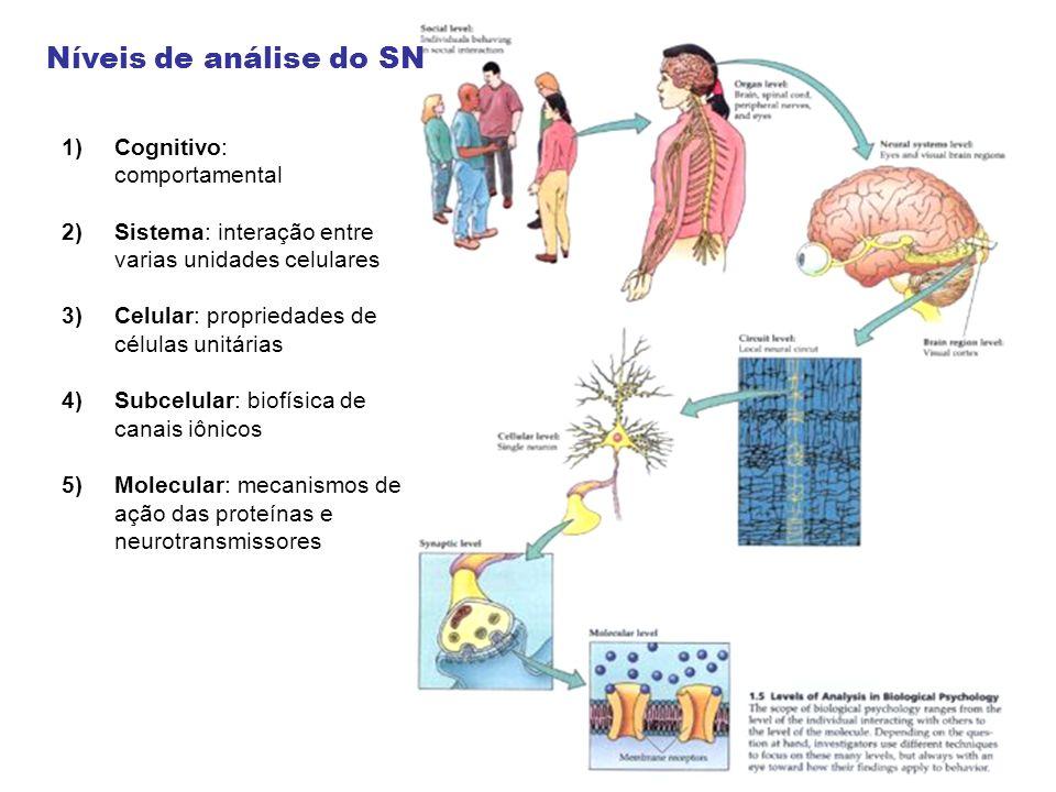 Níveis de análise do SN 1)Cognitivo: comportamental 2)Sistema: interação entre varias unidades celulares 3)Celular: propriedades de células unitárias 4)Subcelular: biofísica de canais iônicos 5)Molecular: mecanismos de ação das proteínas e neurotransmissores