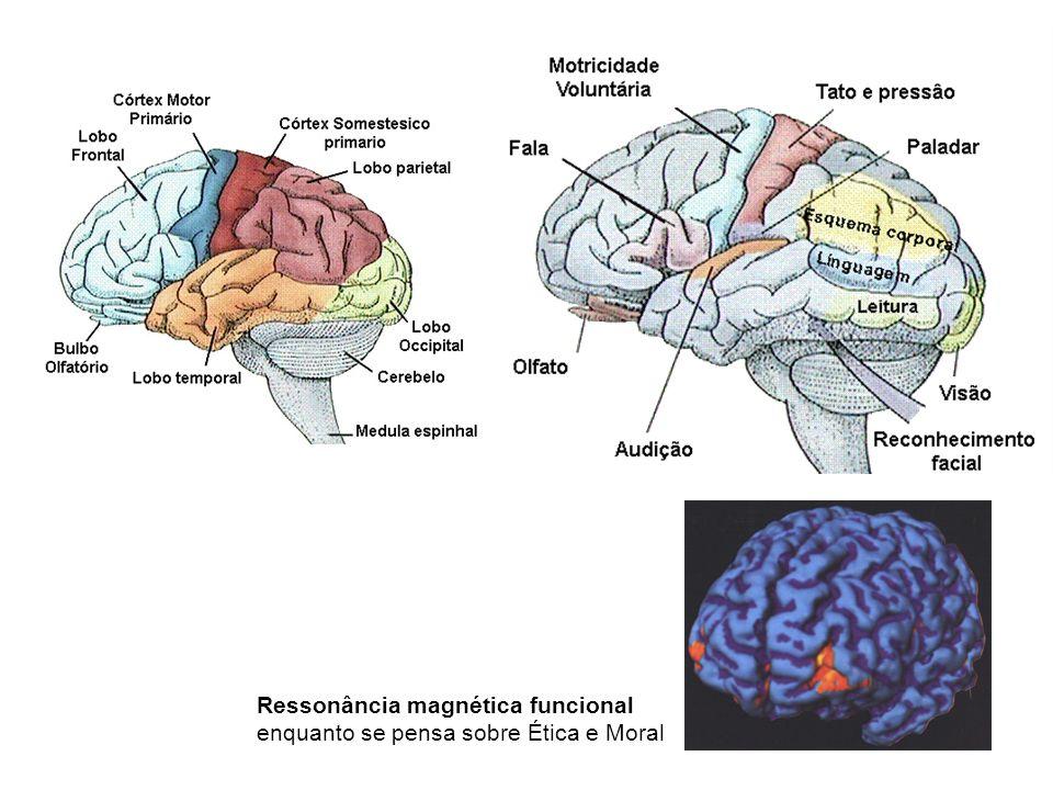 Ressonância magnética funcional enquanto se pensa sobre Ética e Moral
