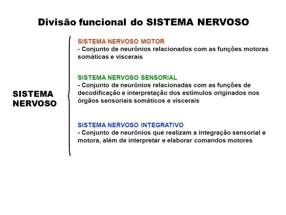 SISTEMA NERVOSO SENSORIAL - Conjunto de neurônios relacionadas com as funções de decodificação e interpretação dos estímulos originados nos órgãos sensoriais somáticos e viscerais SISTEMA NERVOSO MOTOR - Conjunto de neurônios relacionados com as funções motoras somáticas e viscerais SISTEMANERVOSO SISTEMA NERVOSO INTEGRATIVO - Conjunto de neurônios que realizam a integração sensorial e motora, além de interpretar e elaborar comandos motores Divisão funcional do SISTEMA NERVOSO