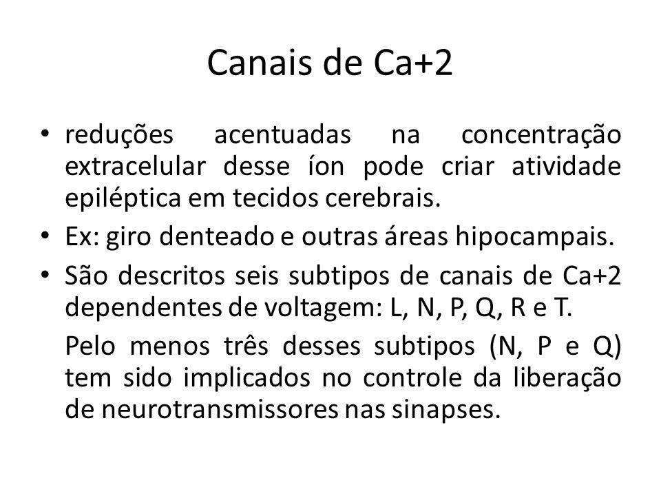 Canais de Ca+2 reduções acentuadas na concentração extracelular desse íon pode criar atividade epiléptica em tecidos cerebrais. Ex: giro denteado e ou