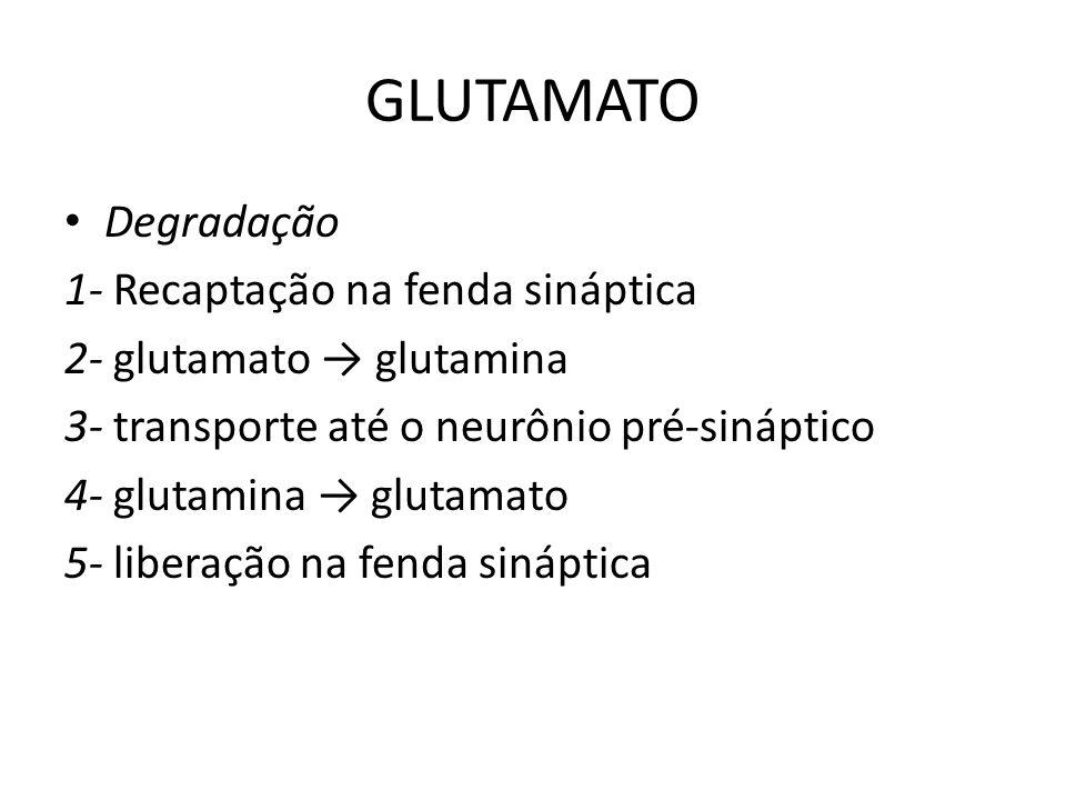 GLUTAMATO Degradação 1- Recaptação na fenda sináptica 2- glutamato glutamina 3- transporte até o neurônio pré-sináptico 4- glutamina glutamato 5- libe