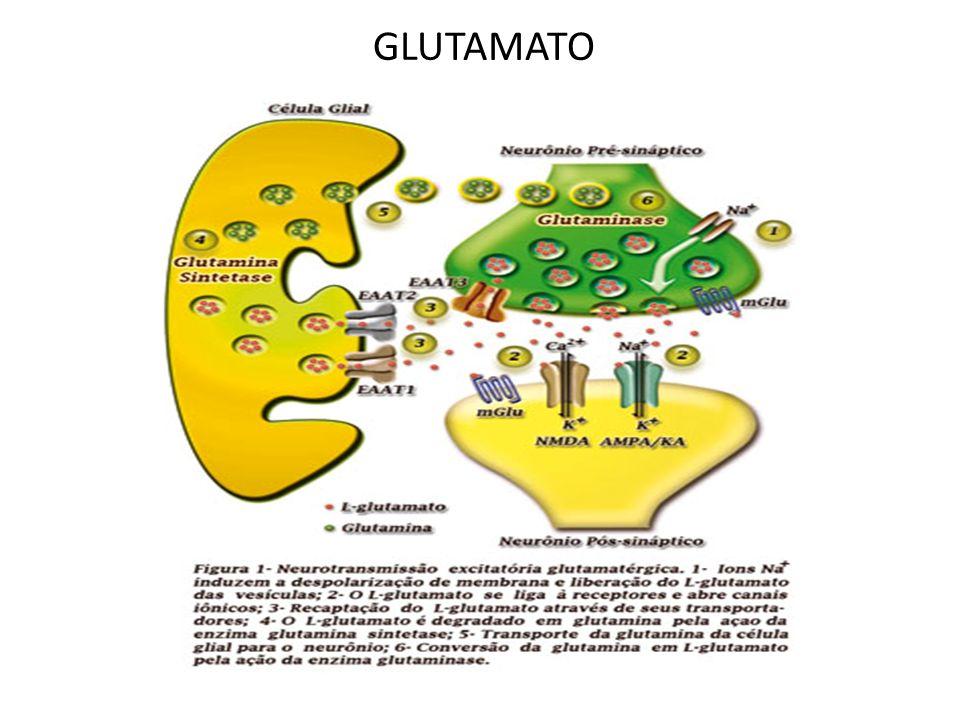 Gama-aminobutirato (GABA) principal neurotransmissor inibitório do SNC.