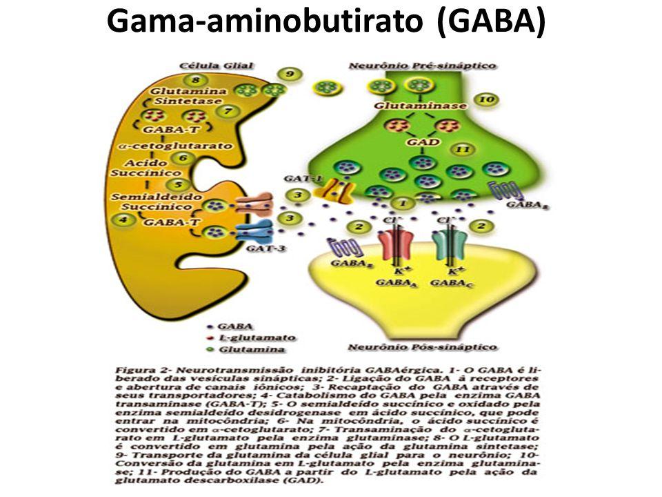 Primidona Não pode ser considerada um barbitúrico, mas muito de seu efeito clínico está associado à biotransformação hepática de suas moléculas em fenobrabital.