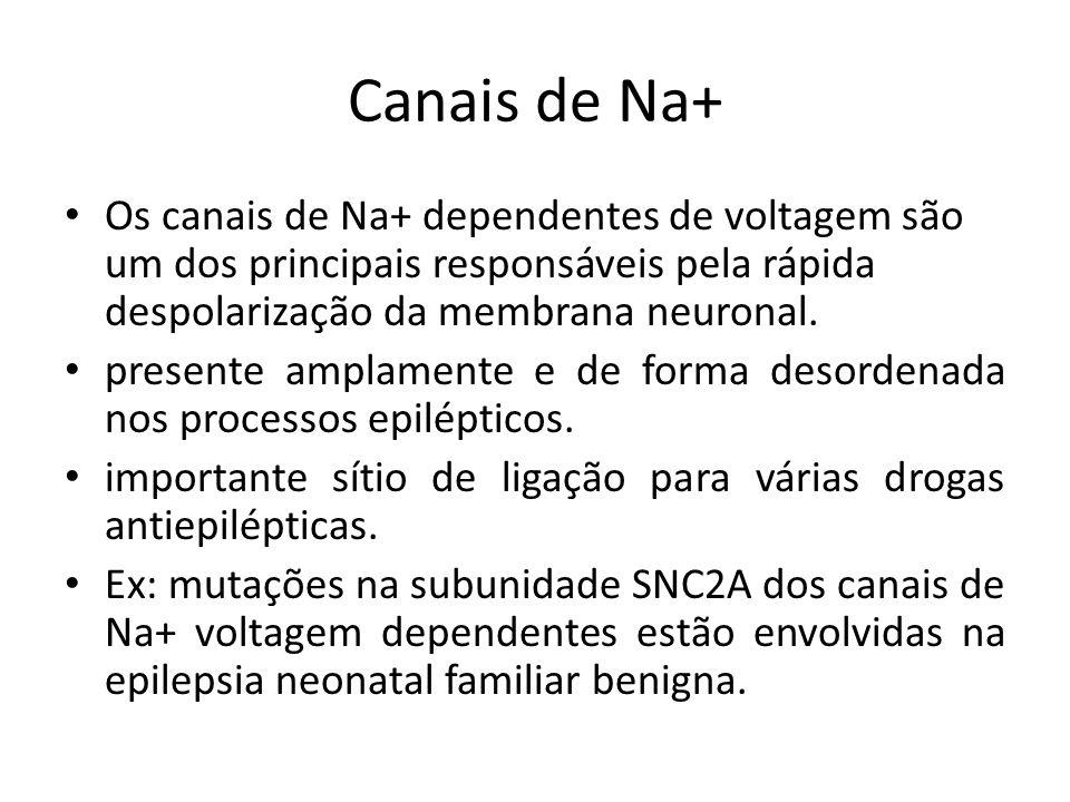 Canais de Na+ Os canais de Na+ dependentes de voltagem são um dos principais responsáveis pela rápida despolarização da membrana neuronal. presente am