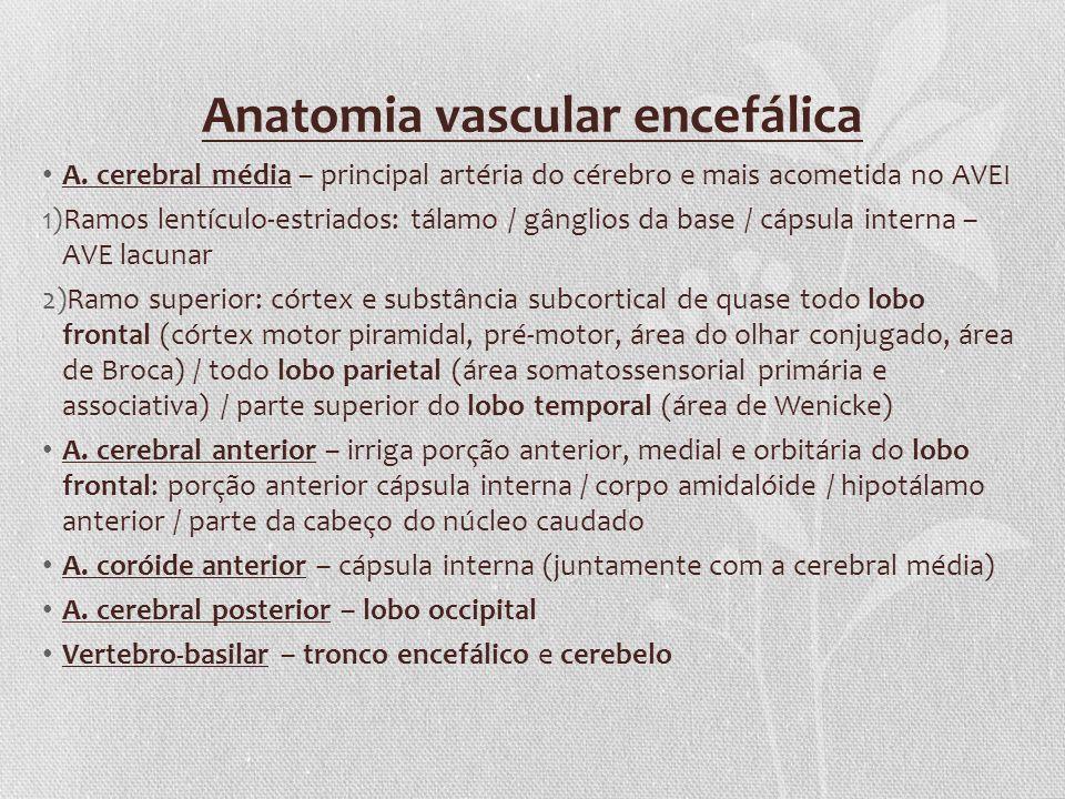 Anatomia vascular encefálica A. cerebral média – principal artéria do cérebro e mais acometida no AVEI 1)Ramos lentículo-estriados: tálamo / gânglios