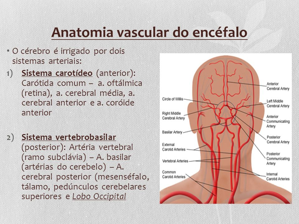 Anatomia vascular do encéfalo O cérebro é irrigado por dois sistemas arteriais: 1)Sistema carotídeo (anterior): Carótida comum – a. oftálmica (retina)
