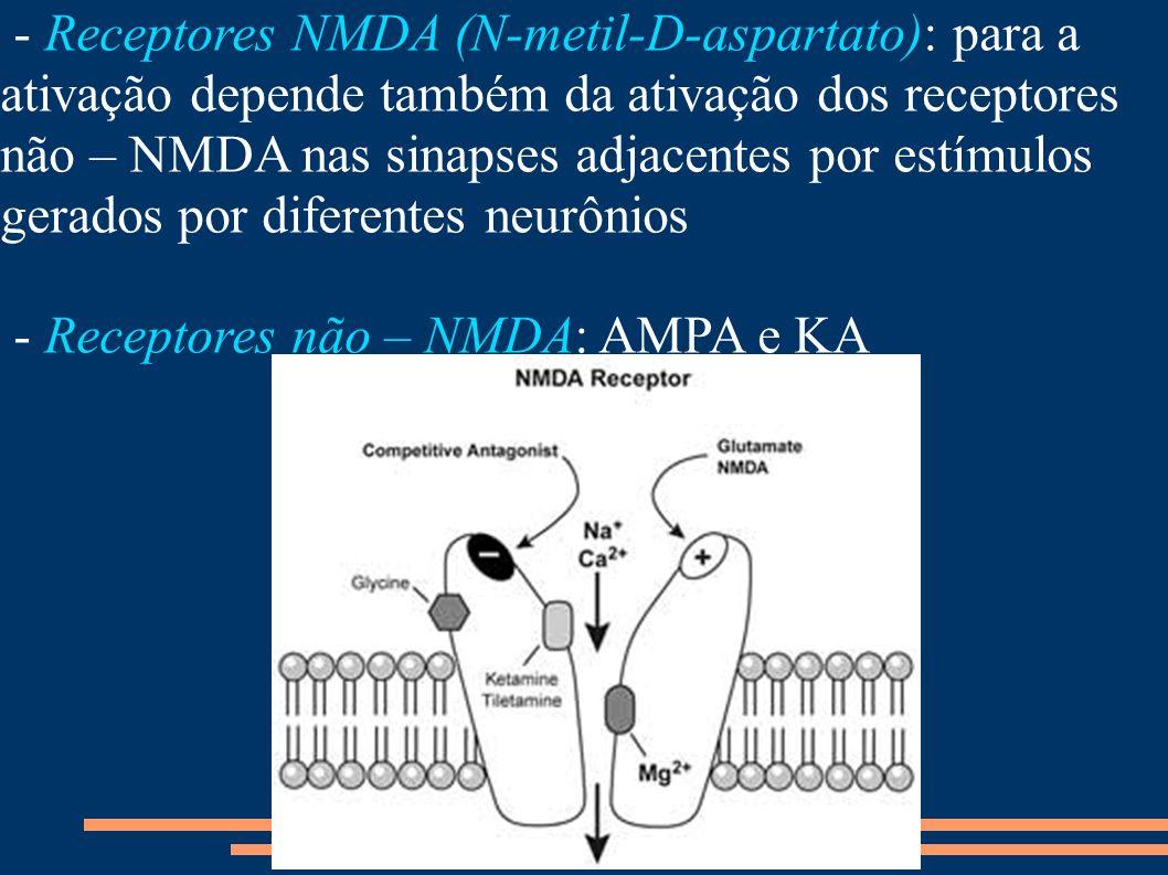 - Receptores NMDA (N-metil-D-aspartato): para a ativação depende também da ativação dos receptores não – NMDA nas sinapses adjacentes por estímulos ge