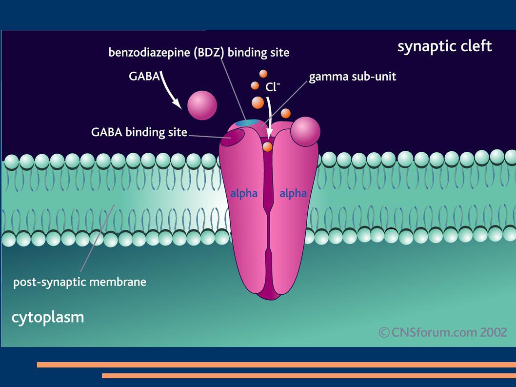 DROGA EFEITO NO INFLUXO IÔNICO EFEITO NO GABA EFEITO NO GLUTAMATO CarbamazepinaBloqueia canais de Na-- Benzodiazepínicos- Aumenta fluxo de Cl mediado pelo GABA - Etossuximida Bloqueia canais de Ca tipo T -- Felbamato-- Bloqueia ativação NMDA Gabapentina- Aumenta liberação de GABA - LamotriginaBloqueia canais de Na-- Fenobarbital- Aumenta fluxo de Cl mediado pelo GABA - FenitoínaBloqueia canais de Na-- Primidona Possivelmente bloqueia canais de Na Aumenta fluxo de Cl mediado pelo GABA - TopiramatoBloqueia canais de NaAtiva GABAa Bloqueia receptores AMPA/KA Valproato Bloqueia canais de Na e canais Ca tipo T Aumenta síntese de GABA e inibe sua degradação Possivelmente diminui a síntese de glutamato