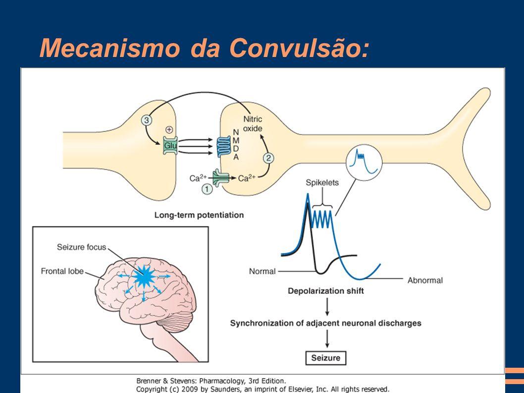 - Entrada de Ca => potencialização prolongada da neurotransmissão excitatória pela síntese de NO - Potenciais de ação prolongada com espículas - Outros mecanismos: *Supressão da neurotransmissão de GABA *Aumento do influxo de cálcio nos canais tipo T em neurônios talâmicos