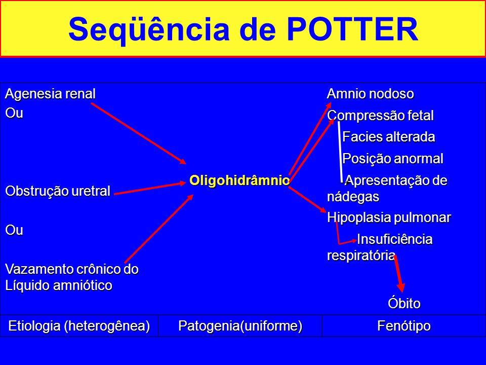 Seqüência de POTTER Agenesia renal Ou Obstrução uretral Ou Vazamento crônico do Líquido amniótico Amnio nodoso Compressão fetal Facies alterada Facies