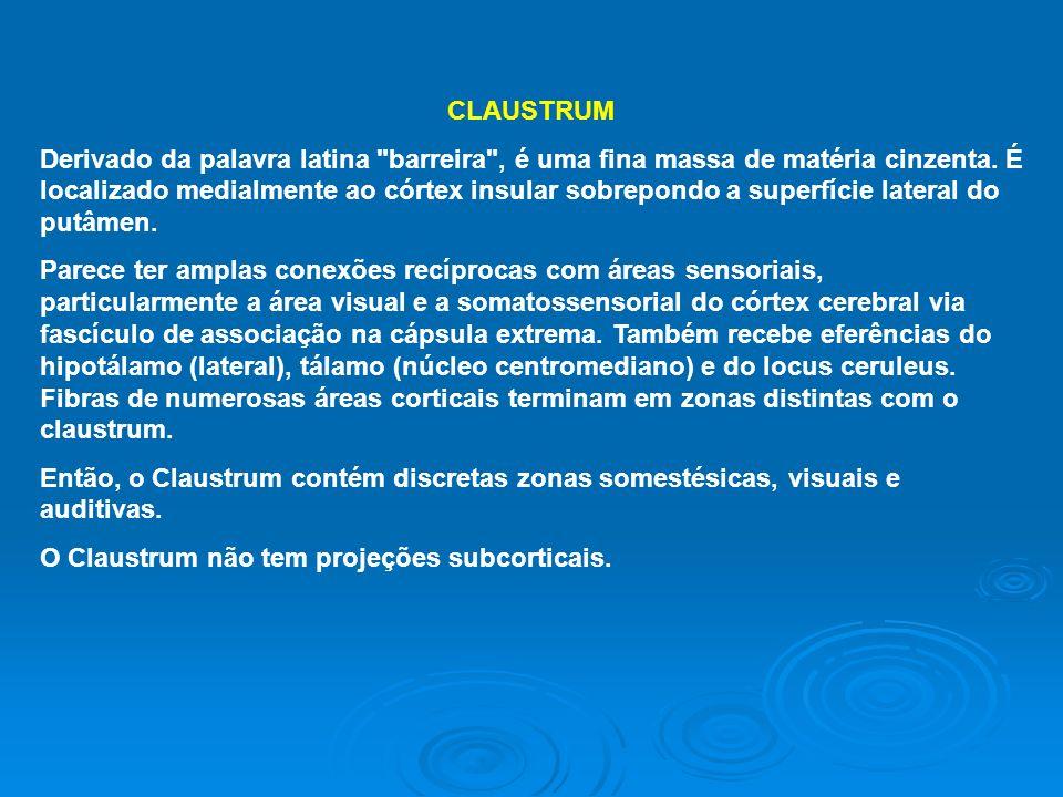 CLAUSTRUM Derivado da palavra latina