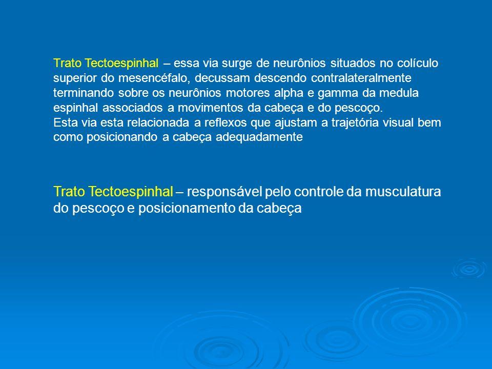 Trato Tectoespinhal – responsável pelo controle da musculatura do pescoço e posicionamento da cabeça Trato Tectoespinhal – essa via surge de neurônios