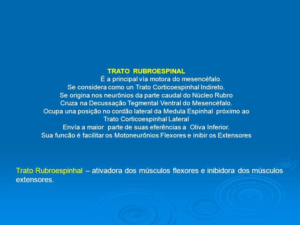 TRATO RUBROESPINAL É a principal vía motora do mesencéfalo. Se considera como un Trato Corticoespinhal Indireto. Se origina nos neurônios da parte cau