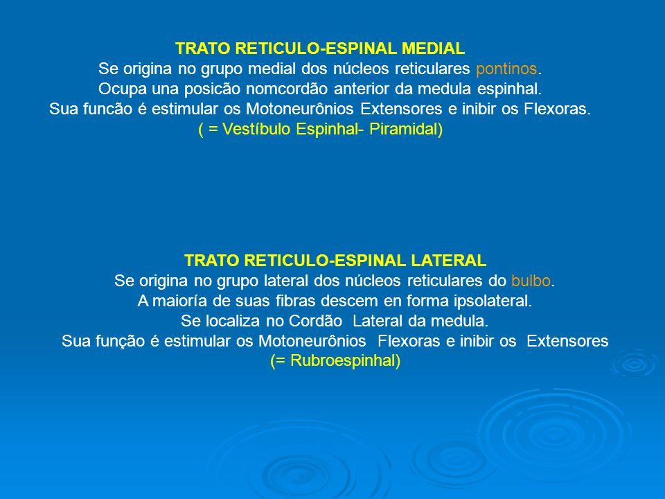TRATO RETICULO-ESPINAL MEDIAL Se origina no grupo medial dos núcleos reticulares pontinos. Ocupa una posicão nomcordão anterior da medula espinhal. Su