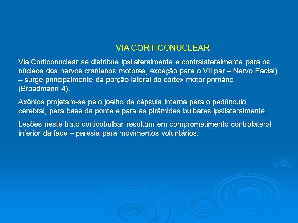 VIA CORTICONUCLEAR Via Corticonuclear se distribue ipsilateralmente e contralateralmente para os núcleos dos nervos cranianos motores, exceção para o