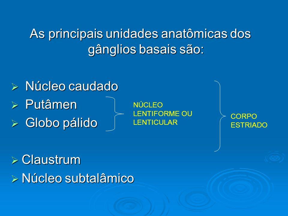 As principais unidades anatômicas dos gânglios basais são: Núcleo caudado Núcleo caudado Putâmen Putâmen Globo pálido Globo pálido Claustrum Claustrum