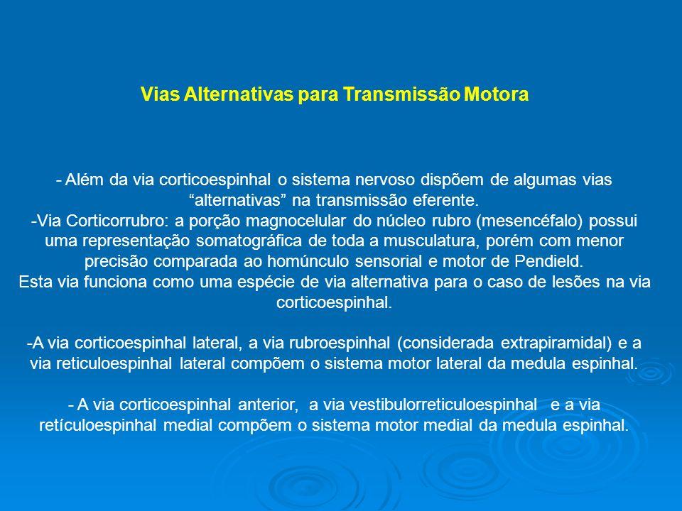 Vias Alternativas para Transmissão Motora - Além da via corticoespinhal o sistema nervoso dispõem de algumas vias alternativas na transmissão eferente