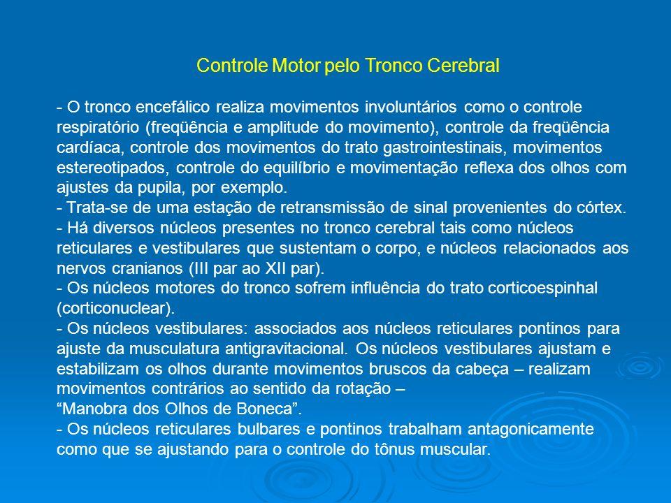 Controle Motor pelo Tronco Cerebral - O tronco encefálico realiza movimentos involuntários como o controle respiratório (freqüência e amplitude do mov