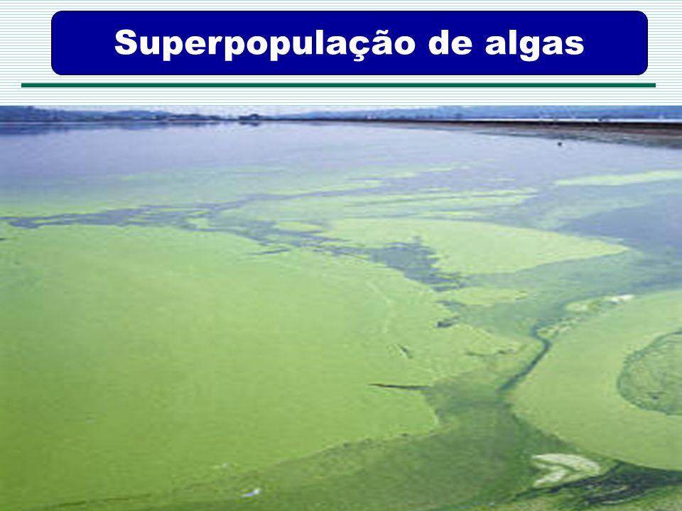 Agência Pernambucana de Vigilância Sanitária APEVISA Superpopulação de algas