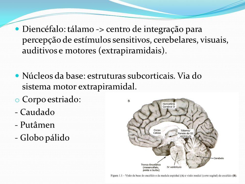Diencéfalo: tálamo -> centro de integração para percepção de estímulos sensitivos, cerebelares, visuais, auditivos e motores (extrapiramidais). Núcleo