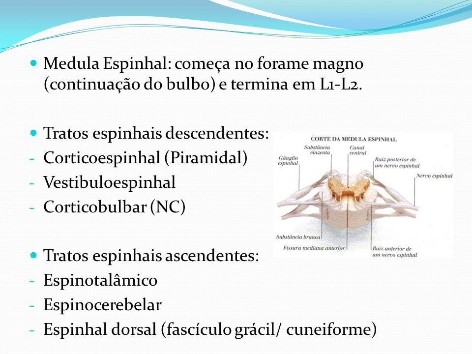 Medula Espinhal: começa no forame magno (continuação do bulbo) e termina em L1-L2. Tratos espinhais descendentes: - Corticoespinhal (Piramidal) - Vest