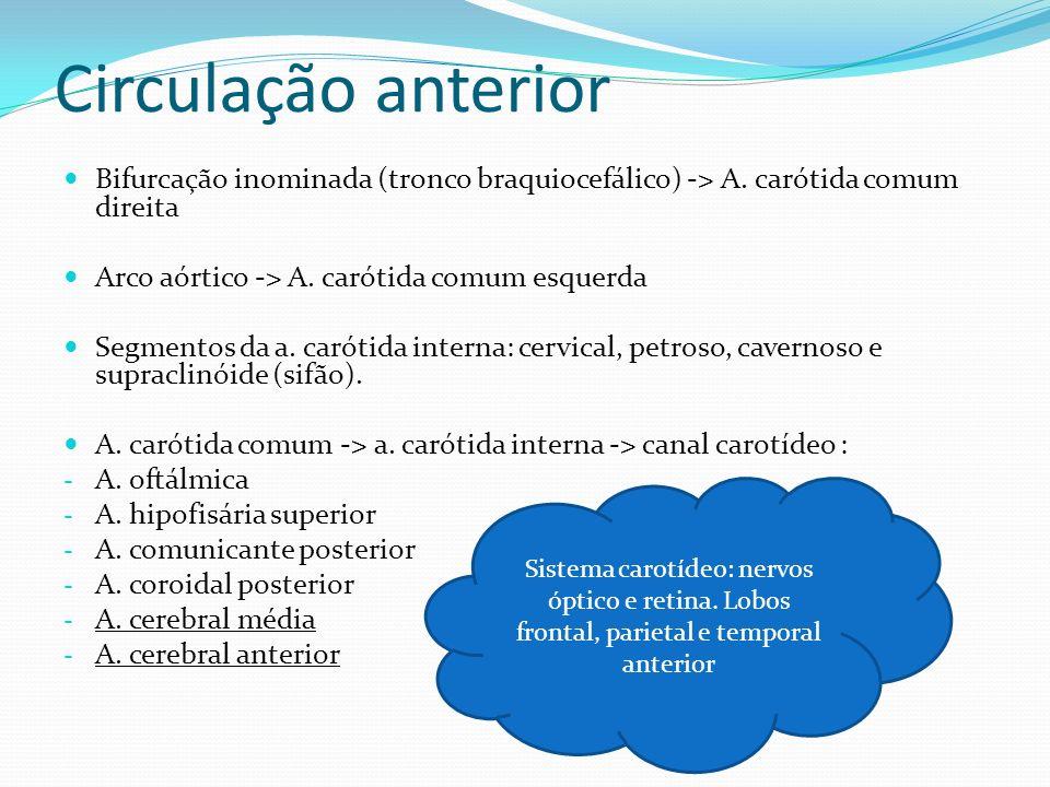 Circulação anterior Bifurcação inominada (tronco braquiocefálico) -> A. carótida comum direita Arco aórtico -> A. carótida comum esquerda Segmentos da