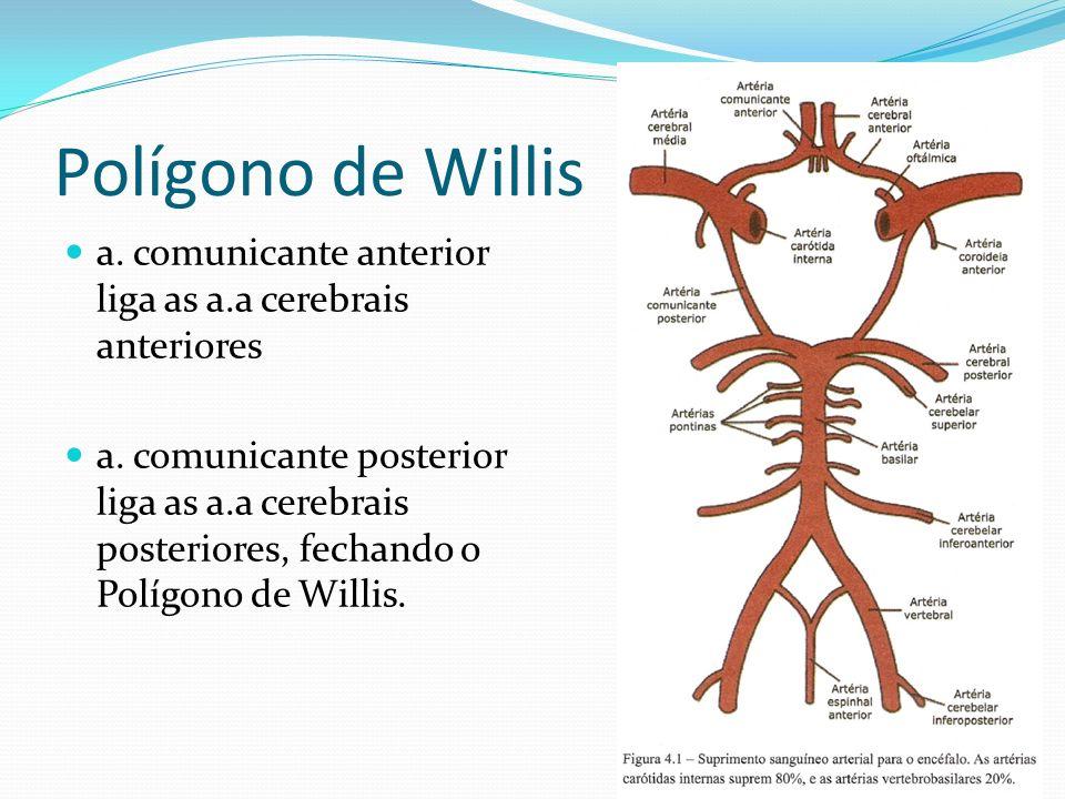 Polígono de Willis a. comunicante anterior liga as a.a cerebrais anteriores a. comunicante posterior liga as a.a cerebrais posteriores, fechando o Pol