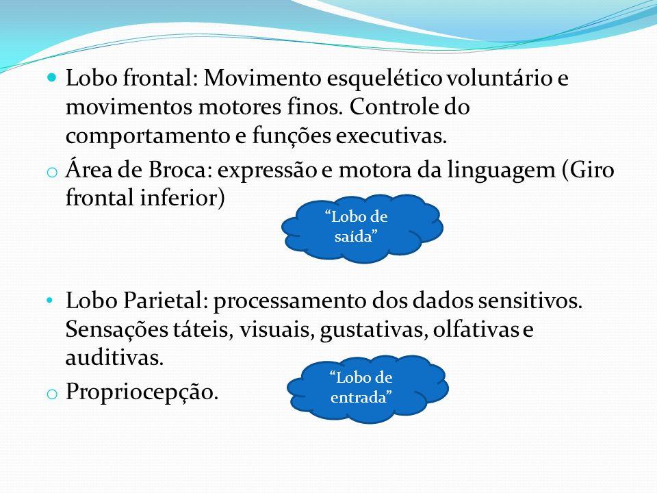 Lobo frontal: Movimento esquelético voluntário e movimentos motores finos. Controle do comportamento e funções executivas. o Área de Broca: expressão