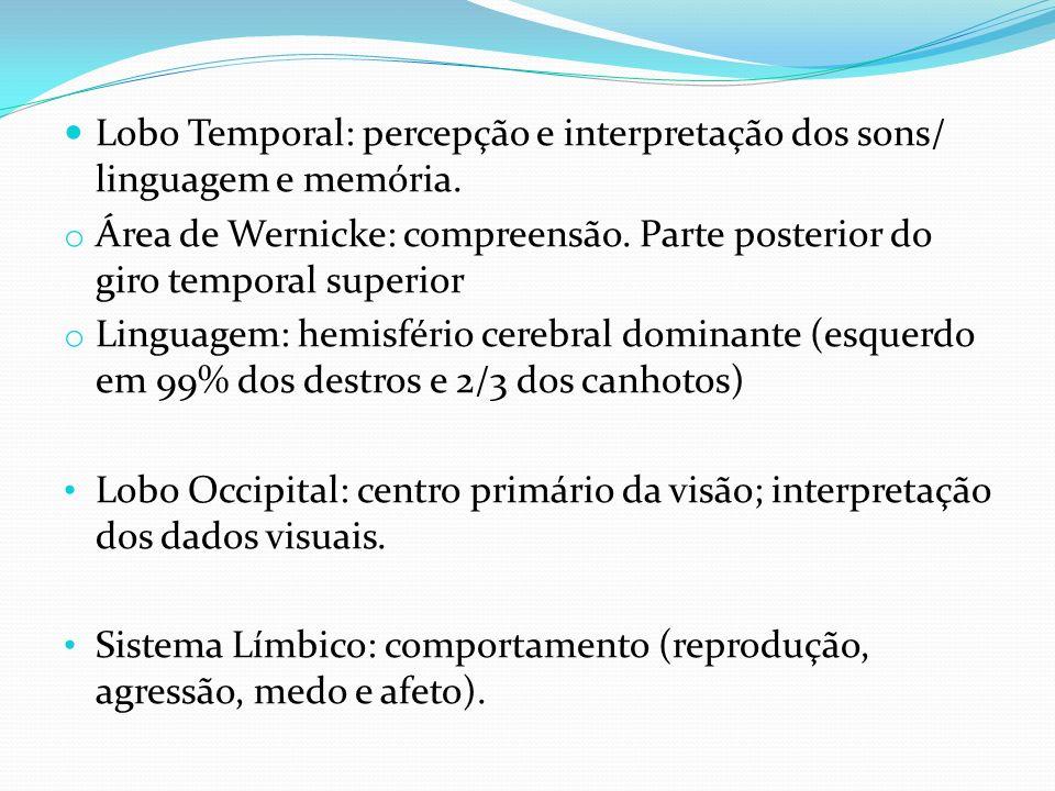 Lobo Temporal: percepção e interpretação dos sons/ linguagem e memória. o Área de Wernicke: compreensão. Parte posterior do giro temporal superior o L