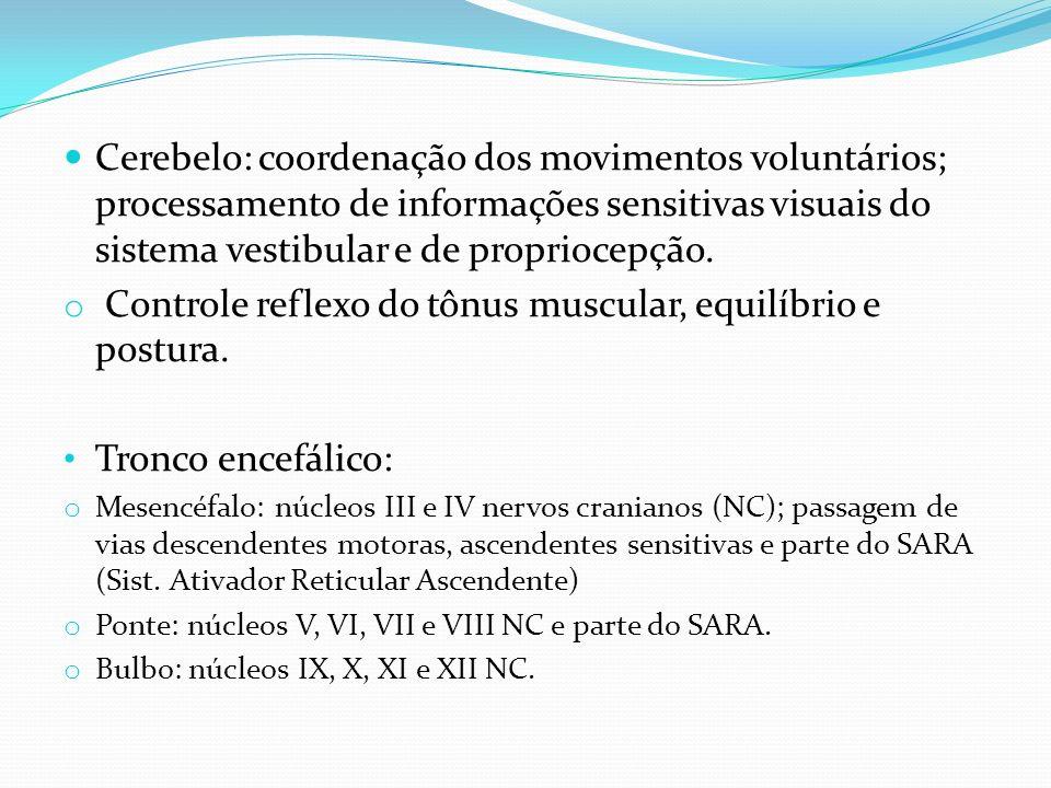 Cerebelo: coordenação dos movimentos voluntários; processamento de informações sensitivas visuais do sistema vestibular e de propriocepção. o Controle