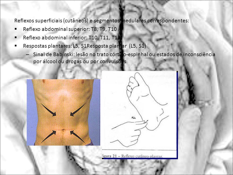Reflexos superficiais (cutâneos) e segmentos medulares correspondentes: Reflexo abdominal superior: T8, T9, T10 Reflexo abdominal inferior: T10, T11,