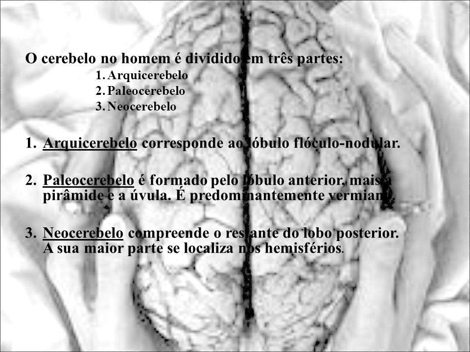 O cerebelo no homem é dividido em três partes: 1.Arquicerebelo 2.Paleocerebelo 3.Neocerebelo 1.Arquicerebelo corresponde ao lóbulo flóculo-nodular. 2.