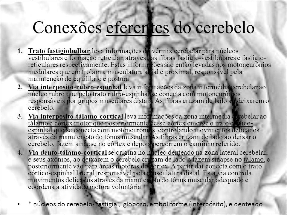 Conexões eferentes do cerebelo 1.Trato fastigiobulbar leva informações do vérmix cerebelar para núcleos vestibulares e formação reticular, através das