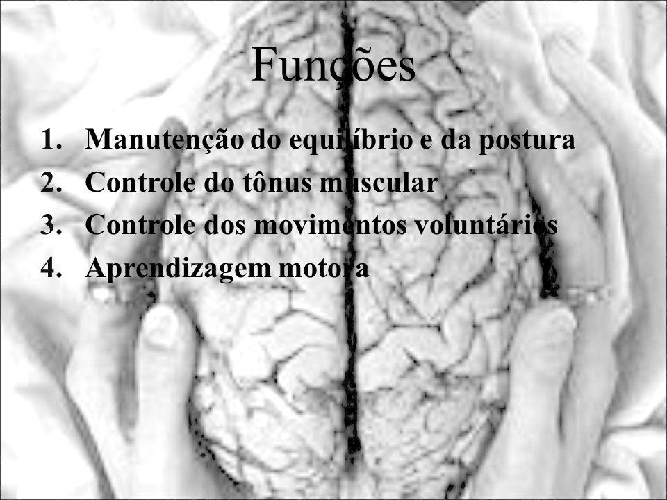 Funções 1.Manutenção do equilíbrio e da postura 2.Controle do tônus muscular 3.Controle dos movimentos voluntários 4.Aprendizagem motora