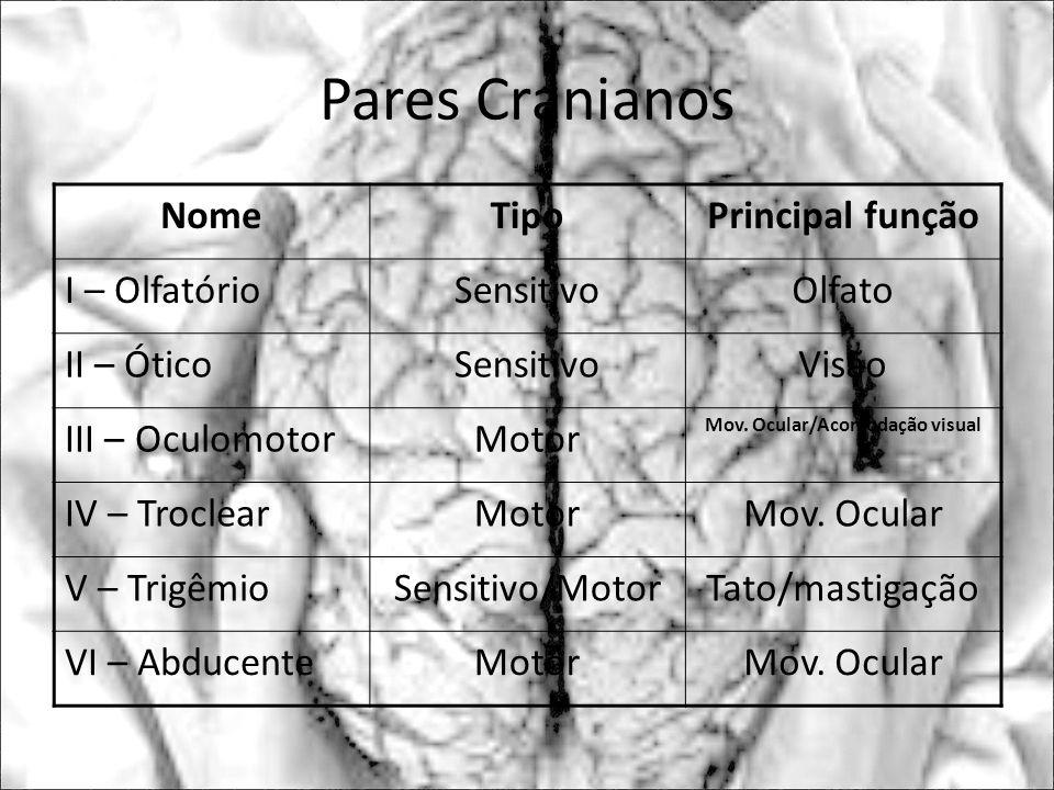 NomeTipoPrincipal função I – OlfatórioSensitivoOlfato II – ÓticoSensitivoVisão III – OculomotorMotor Mov. Ocular/Acomodação visual IV – TroclearMotorM