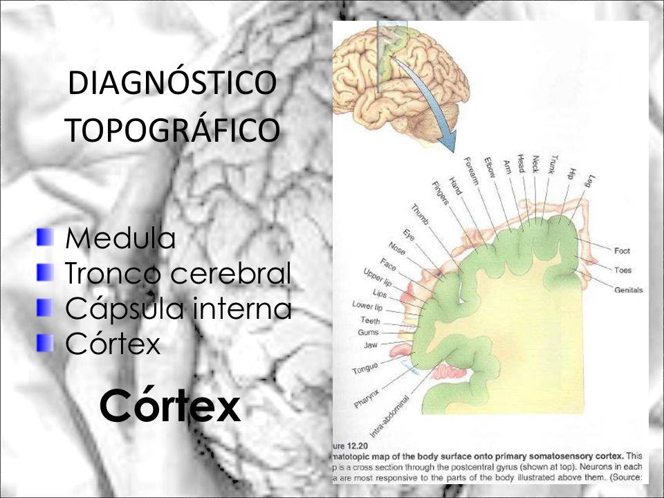 Medula Tronco cerebral Cápsula interna Córtex Córtex