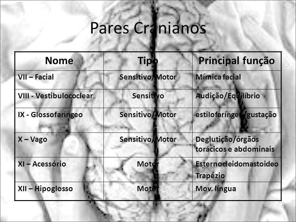 Pares Cranianos NomeTipoPrincipal função VII – FacialSensitivo/MotorMímica facial VIII - VestibulococlearSensitivoAudição/Equilíbrio IX - Glossofaríng