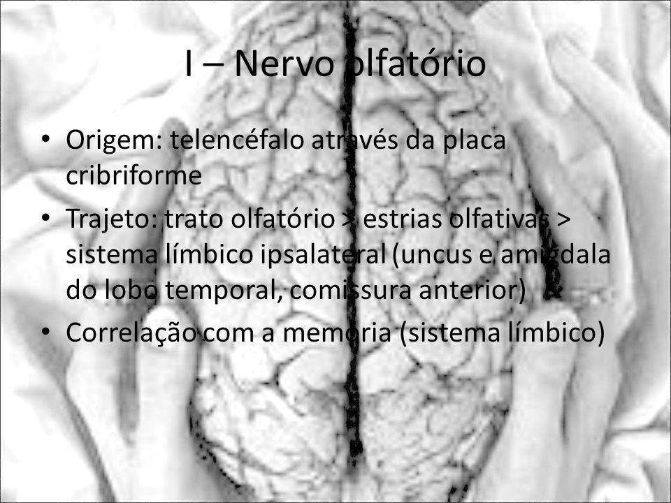I – Nervo olfatório Origem: telencéfalo através da placa cribriforme Trajeto: trato olfatório > estrias olfativas > sistema límbico ipsalateral (uncus