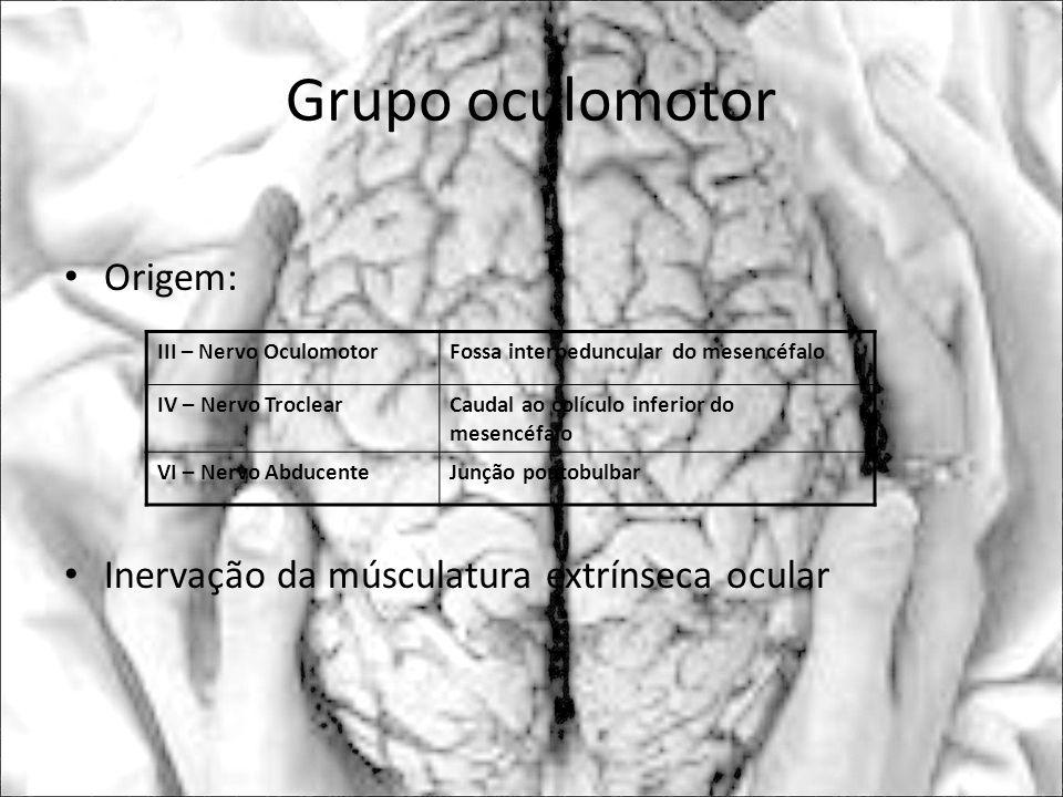 Grupo oculomotor Origem: Inervação da músculatura extrínseca ocular III – Nervo OculomotorFossa interpeduncular do mesencéfalo IV – Nervo TroclearCaud