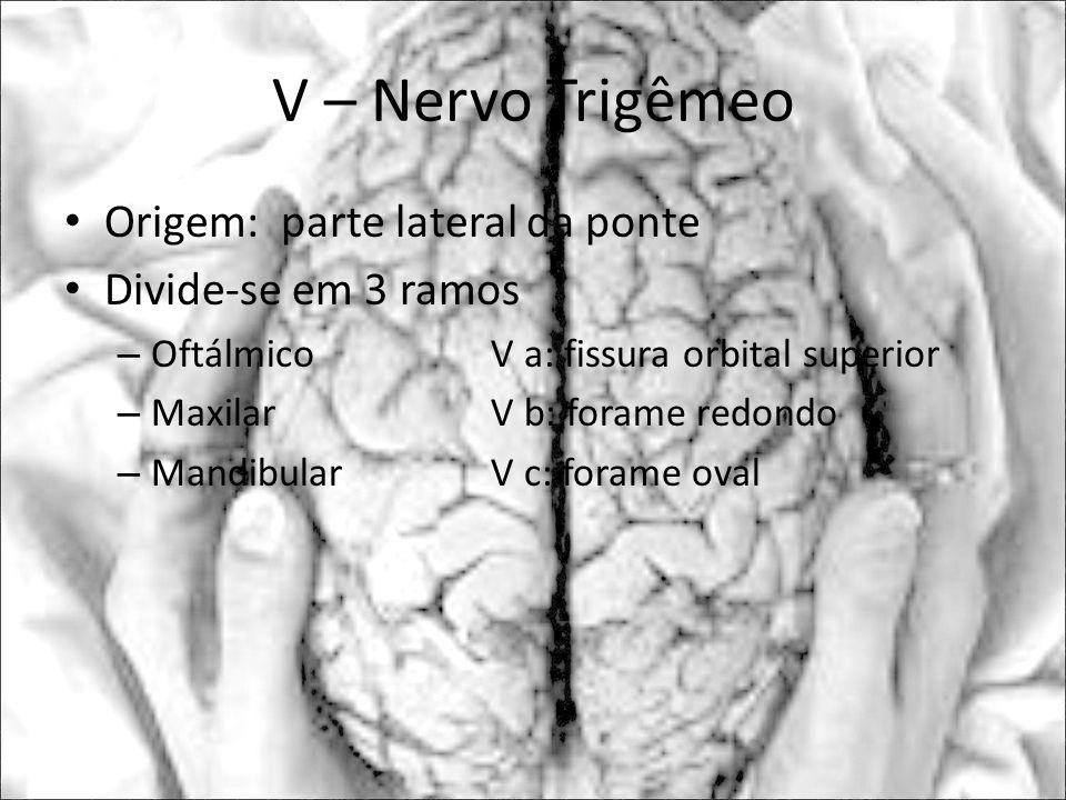 V – Nervo Trigêmeo Origem: parte lateral da ponte Divide-se em 3 ramos – OftálmicoV a: fissura orbital superior – Maxilar V b: forame redondo – Mandib