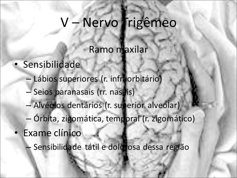 V – Nervo Trigêmeo Ramo maxilar Sensibilidade – Lábios superiores (r. infraorbitário) – Seios paranasais (rr. nasais) – Alvéolos dentários (r. superio