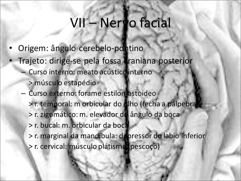 VII – Nervo facial Origem: ângulo cerebelo-pontino Trajeto: dirige-se pela fossa craniana posterior – Curso interno: meato acústico interno > músculo