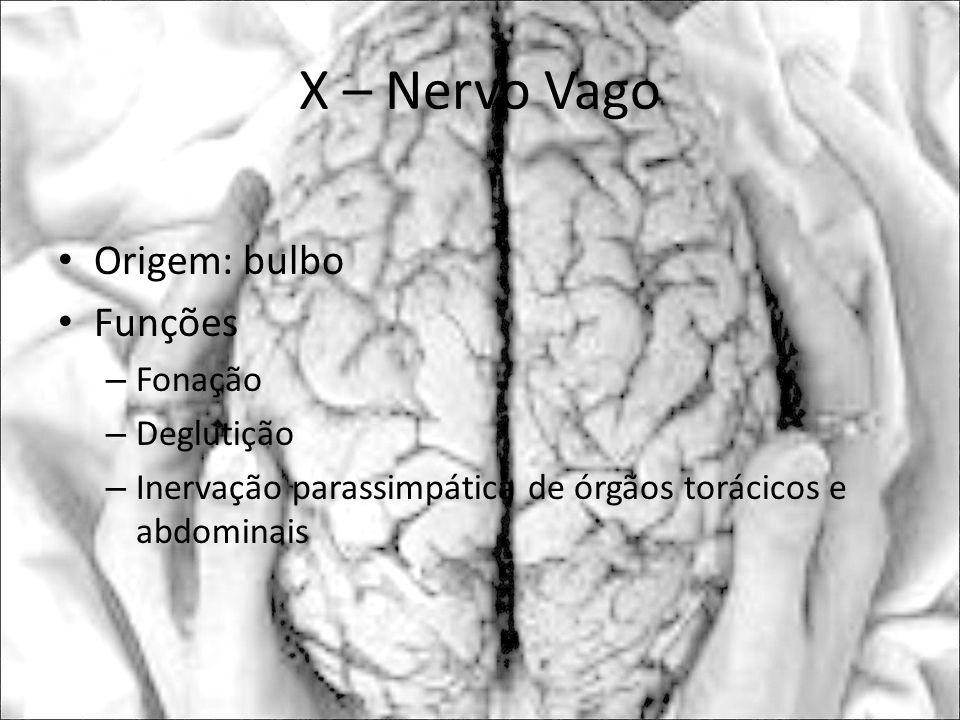 X – Nervo Vago Origem: bulbo Funções – Fonação – Deglutição – Inervação parassimpática de órgãos torácicos e abdominais