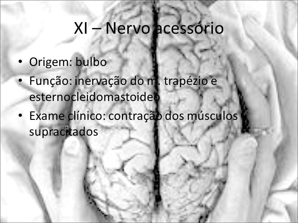 XI – Nervo acessório Origem: bulbo Função: inervação do m. trapézio e esternocleidomastoideo Exame clínico: contração dos músculos supracitados