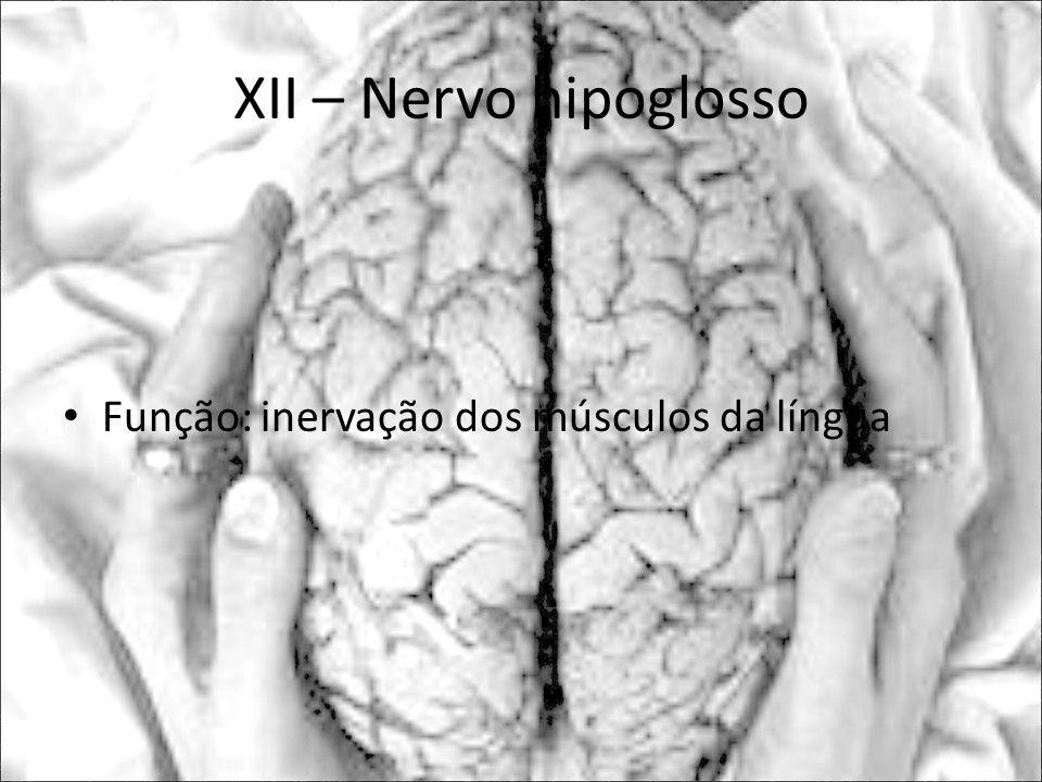 XII – Nervo hipoglosso Função: inervação dos músculos da língua