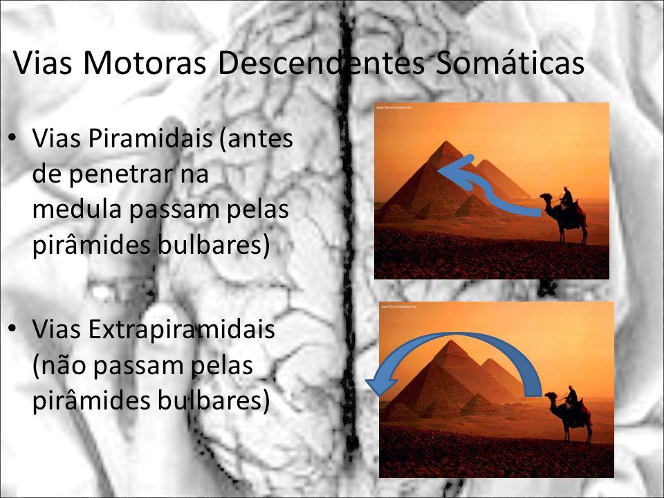 Vias Motoras Descendentes Somáticas Vias Piramidais (antes de penetrar na medula passam pelas pirâmides bulbares) Vias Extrapiramidais (não passam pel